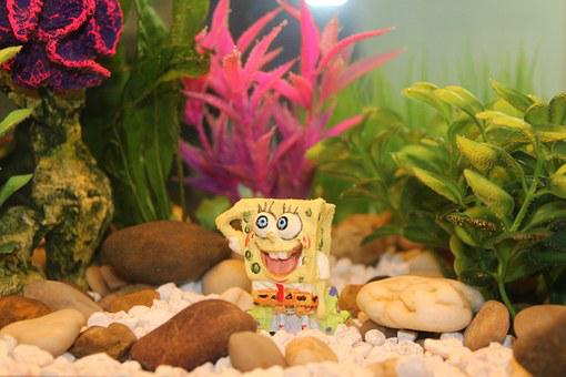 Fish Tank, Fish, Underwater, Aquarium, Tank, Water