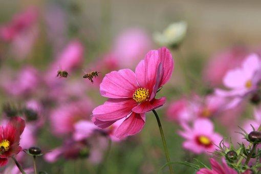 Flower, Bee, Quentin Chong, Garden