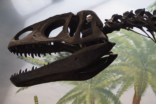 Dinosaur, Dino, T Rex, Prehistoric Times, Giant Lizard