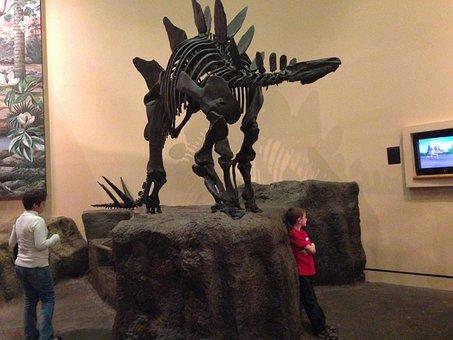 Stegosaurus, Museum, Skeleton, Prehistoric, Dinosaur