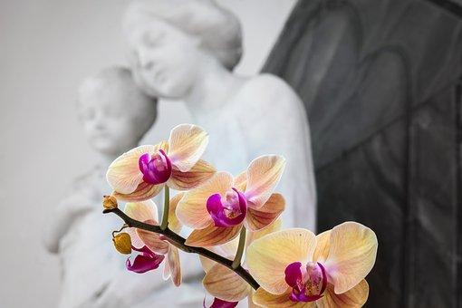 Orchid, Maria, Jesus, Flower, Church, Catholic