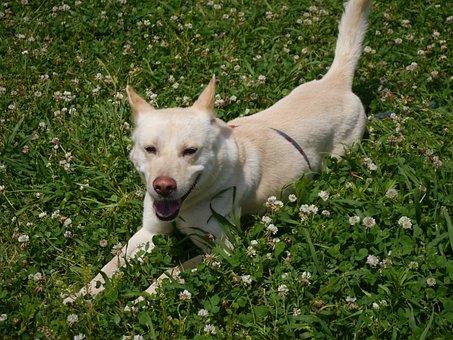 Dog, Based On Stray Dogs, Taro, Rengeso, Ragweed