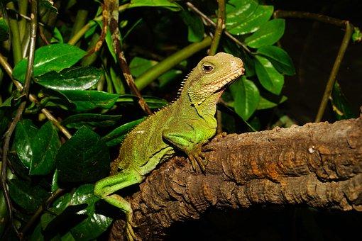 Lizard, Urtier, Reptile, Dry, Terrarium, Scale, Exhibit