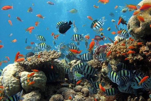 Fish, Aquarium, Sea, Fish Tank, Coral Reef, Reef
