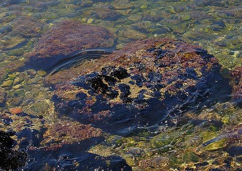 Water, Sea, Coast, Water Circles, Shallow Water