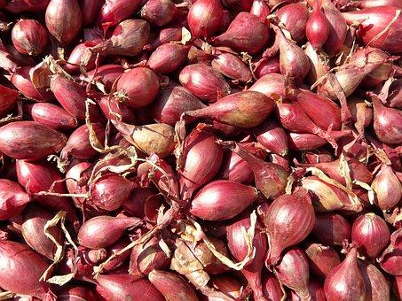 Red Shallots, Shallot, Noble Onion, Onion, Sharp