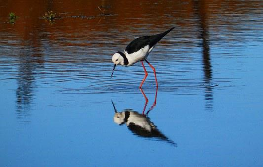 Bird, Amp Shipping, Water Bird, Nature, Wild Birds