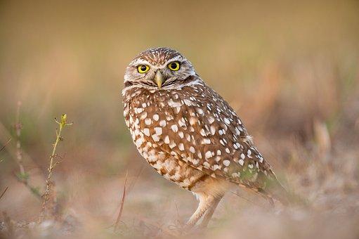 Bird, Beak, Feather, Animal, Fly, Owl, Eyes, Sharp