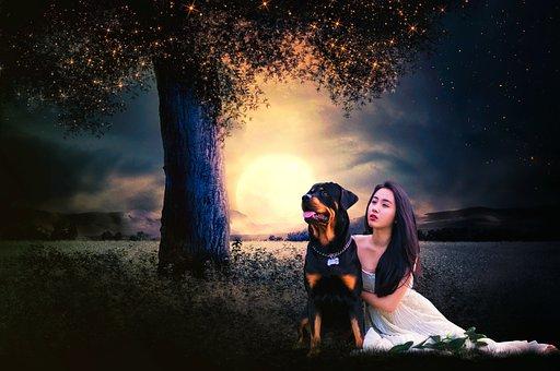 Sitting, Waiting Girl, Dog, Night, Beautiful, Scene