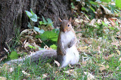 Squirrel, Nature, Central Park, Nyc, Outdoor, Tourism