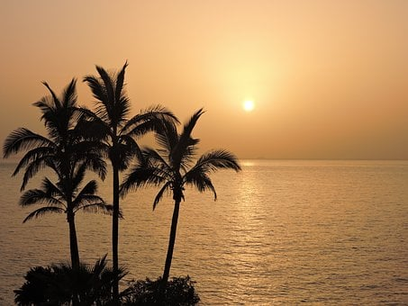 Romantic, Sunset, Atardeser, Sea, Palms, Palma