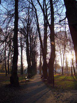 Park, Alley, Sunset, Autumn, Tree, Spacer, Alleys