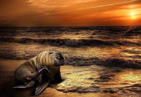 Nature, Sea, Beach, Meeresbewohner, Sunrise, Coast