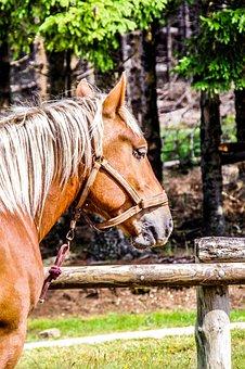 Horse, Randonée, Mare, Broodmare, Horses, Equine, Mane