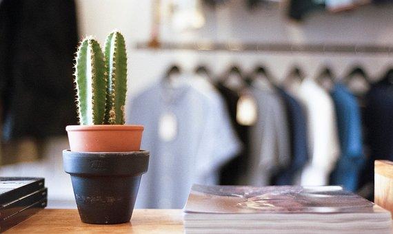 Plant, Garden, Flowerpot, Vase, Business, Store, Shop