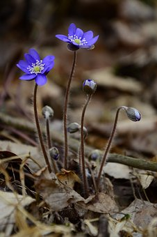 Liverwort, Beautiful, Spring, Fluke