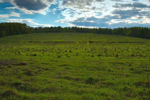 Field, Hill, Mole, Grass, Forest, Uneven, Screw Up, Dig