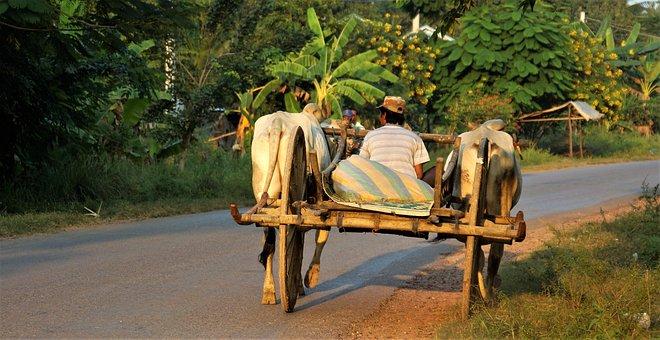 Evening, Going, Home, Workman, Ox, Cart, Simple, Life