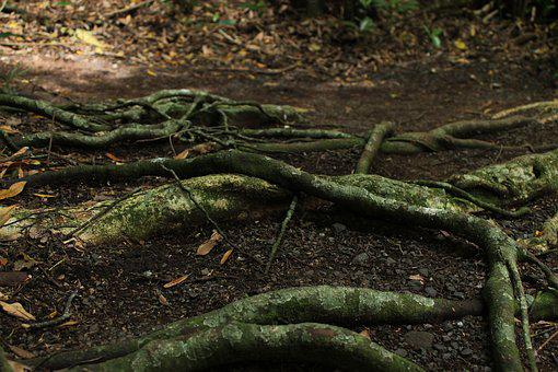 Trees, Roots, Nature, Tree With Roots, Plant