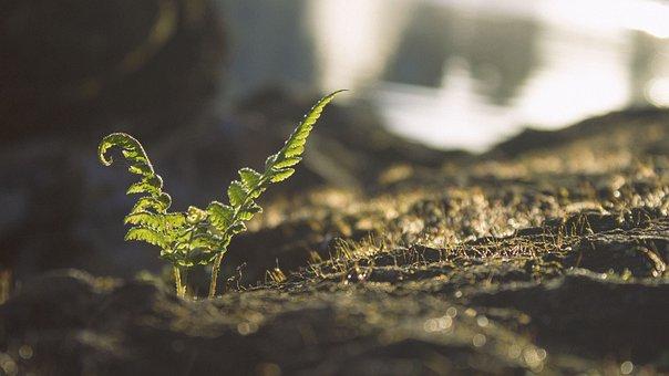 Leaves, Green, Plant, Garden, Soil