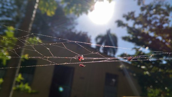 Outback, Country, Spiderweb, Insects, Trapped, Nature