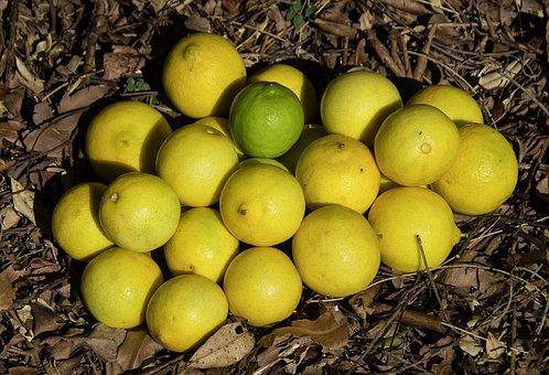 Limes, Tahitian Lime, Persian Lime, Citrus Latifolia