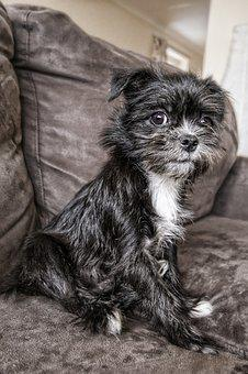 Dog, Sitting, Sofa, Animal, Pet, Cute, Puppy, Adorable