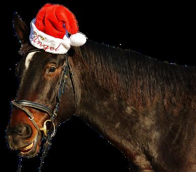 Horse, Laugh, Grin, Christmas, Santa Hat, Funny, Cute