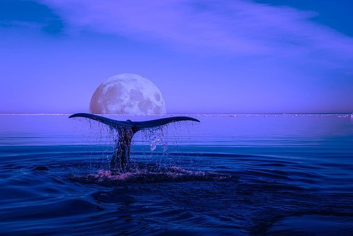 Whale, Breaching, Marine Life, Ocean, Moon, Edits