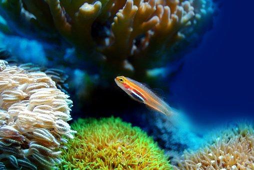 Fish, Coral, Sea, Underwater, Reef, Water, Marine