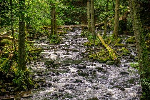 Forest, Trees, River, Stones, Rock, Forests, Landscape