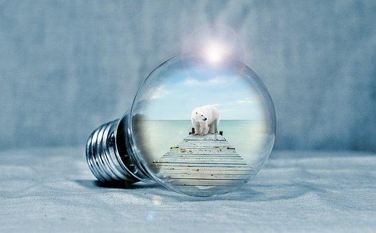 Polar Bear, Web, Sea, Light, Light Bulb, Energy