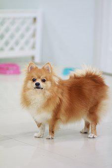 Dog, Cute, Littledog, Puppy, Mini, Pet, Love