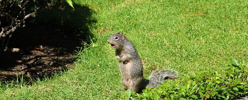 Squirrel, Animals, Animal, Nature, Forest, Park