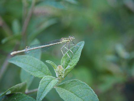 Dragonfly, Insect, Leaf, Close Up, Nature, Wing