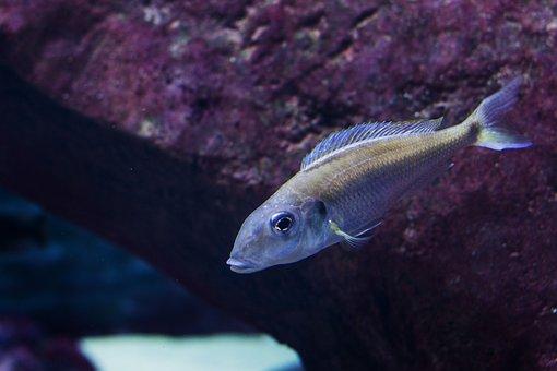 Zoo, Wrocław, Zoological Garden, Blue, Under-water