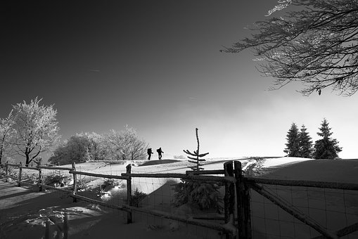 Fence, Snow, Winter, Trees, Plant, Travel, People