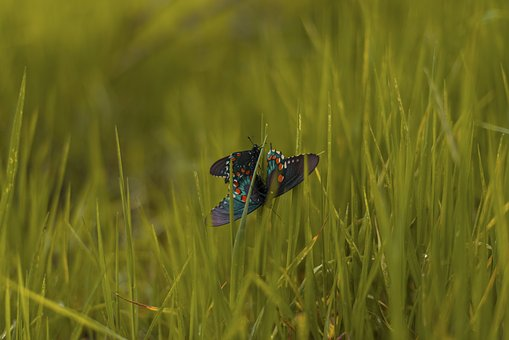 Butterfly, Insect, Nature, Green, Grass, Field, Farm
