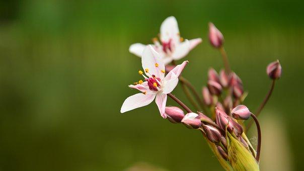 Flower, Amp Shipping, Pond