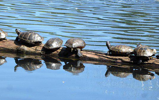 Animal, Turtle, Reptile, Water Animal, Body Kits, Relax