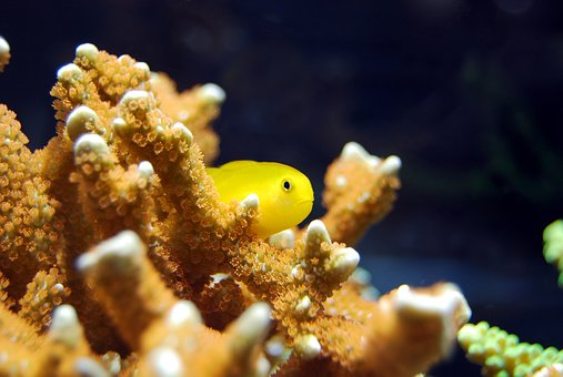 Fish, Coral, Red, Yellow, Underwater, Water, Nature