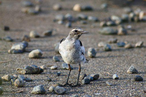 Animal, Little Bird, High Security Level, Young Bird