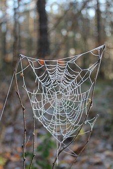 Cobweb, Gefrohren, Winter