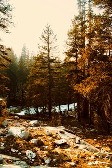 Yosemite, National Park, California, Landscape, Tourism