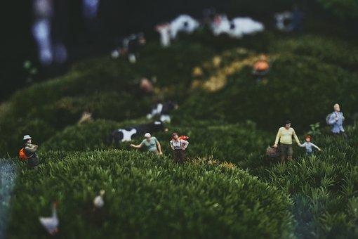 Green, Plant, Nature, Garden, Outdoor, People, Men