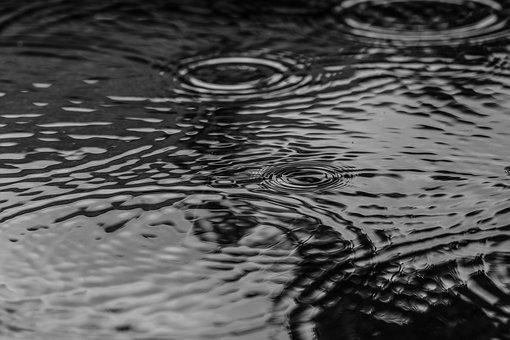 Puddle, Water, Rain, Nature