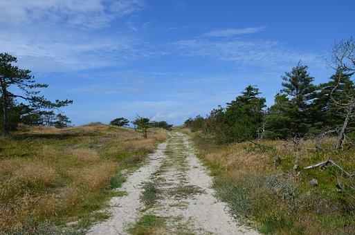 Denmark, Husby Klitplantage, Scandinavia, North Sea