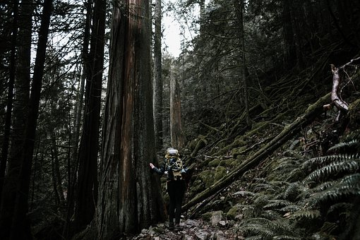 People, Girl, Woman, Climbing, Hiking, Trek, Trees
