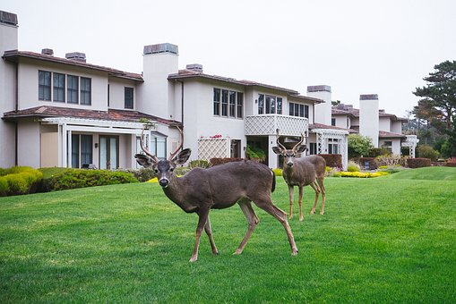 Deer, Animal, Grass, House, Trees, Sky, Plants, Windows