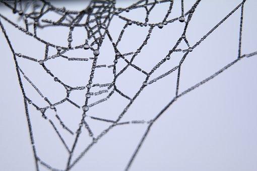 Cob, Spider, Web, Close-up